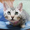狙いを定めて突進しちゃうかわいい子猫♡