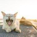 野良猫の寿命は平均より短い!不幸な猫を増やさない為に心がけたい事
