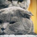 オス猫同士が交尾のような行動をする理由と対処法