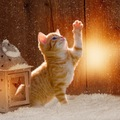 猫のランプおすすめ商品6選!可愛い物や便利な物まで