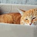 猫の落ち着ける場所とは?お家で出来る5つの事