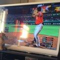 猫がテレビを見つめる理由