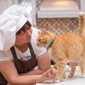 猫の体はとてもデリケート!毎日の食事をアドバイス