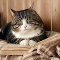 猫の不老薬『AIM』で猫の平均寿命30歳超えの時代に?