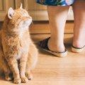 猫のキッチンマットおすすめ4選