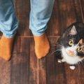猫が飼い主の足の間をくぐる3つの心理