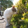 保護猫をお迎えしたら?気を付けるべきポイント6つ