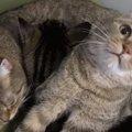 【みんな一緒って幸せだね❤】寄り添い合って眠る猫ちゃんズ♪