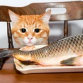 猫に生魚を与える時の注意点とその与え方について