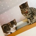4ヶ月の猫 問題行動をなくす方法