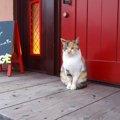 猫の表札がかわいい!マンションにもポストにも使えるかわいいデザインの…
