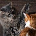 同居猫と相性が合わず、現れた愛猫の問題行動