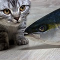 猫はマグロを食べても大丈夫?含まれる栄養や与える際の注意点など