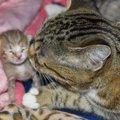 出産直前に捨てられた母猫は帝王切開で命を救われた