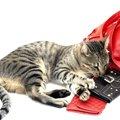 猫のカードケースのおすすめ10選!かわいい、おしゃれな商品を紹介