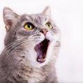 子猫が夜泣きをする理由と対策