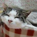 うっとりしてる?猫がリラックスできる音楽を検証してみました