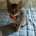 ねずみ退治の仕事はまだ練習中…保護猫ハルと私の出会い