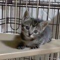 子猫の好奇心は無限大!大ジャンプで大人になる♪