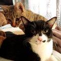 譲渡会で出会った甘えん坊な猫男子「はーくん♂」と「ケビン♂」