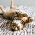 猫にまたたびを与えすぎると中毒になる?またたびの危険性と与え方