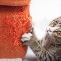 猫が壁を引っ掻く時の我が家の対処法
