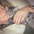 猫は記憶力がないの?久しぶりに会っても素っ気ない理由