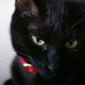 黒猫の性格は人懐っこい。種類や環境による変化について