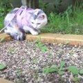 シロバナタンポポの成長を見守る猫ちゃん♡