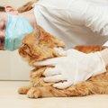 猫が鼻血を出す原因や考えられる病気、対処法まで