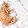 猫が『そっとしておいて欲しい』シーン3選
