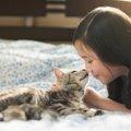 猫ってどんな動物?習性や好きな物、嫌いな物