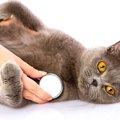 猫を去勢する費用と手術の注意点