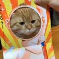 おちゃめで可愛い♡顔はめ絵本で飼い主さんと遊ぶ猫ちゃん♪