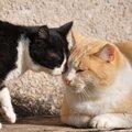 猫が頭突きをする5つの心理