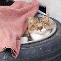 毒餌を与えられた野良猫は人に裏切られても最後まで人を信じてくれた