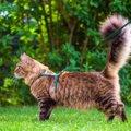 猫のハーネスおすすめ商品や選び方、付け方まで