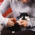 猫に爪切りは必要?爪とぎだけではダメな理由