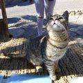 香川の猫島2か所への行き方やマナー、おすすめポイント