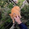 木の枝の先で立ちすくむ猫…緊迫する救助活動の行く末は?