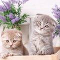 猫がラベンダーで死んでしまう!知っておきたい危険性とは?