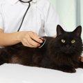 猫の横隔膜ヘルニアの症状と治療法、手術の費用