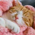 猫が自分の身体をチュパチュパ吸いながら眠るのはなぜ?