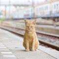 猫と電車に乗る時の料金、マナー