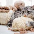 猫の嘔吐……それは誤飲によるのかもしれません