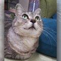 飼い主に捨てられ隠れていた福猫との運命的な出会い。今では家族の一員に!