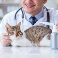 猫の平熱は人より高い!正しい体温の測り方と熱がある時の対処法