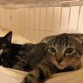 保護猫2匹と運命的な出会い♡黒白タキシードの「半蔵」と耳折れの「那…