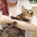 シャンプー頑張る!水嫌いが悪化した猫ちゃん…