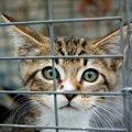 子猫を安全に捕獲するための方法と3つのポイント